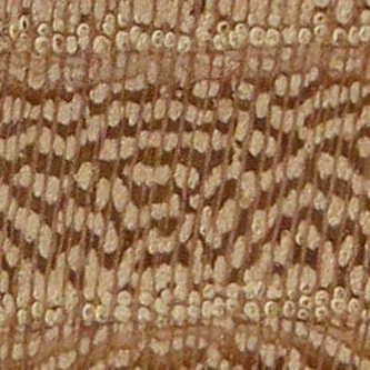 zelkova parvifolia ou ulmus parvifolia