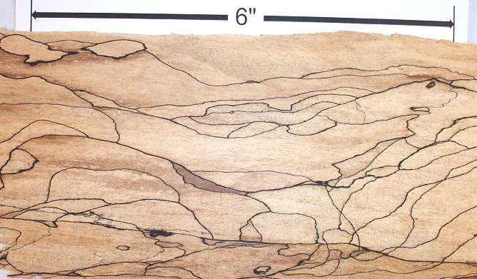 Spalted Maple Wood ~ Spalting in wood