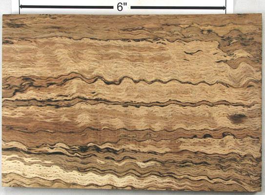 Spalting In Wood