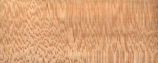 Sugar Maple Wood ~ Quilted maple